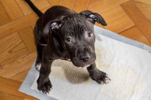 Puppy sitting on a pad
