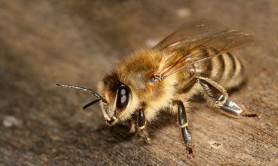 Bee on wood