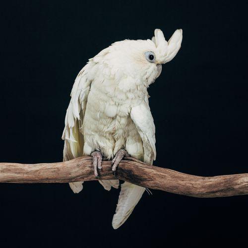 Exotic birds: Malcolm
