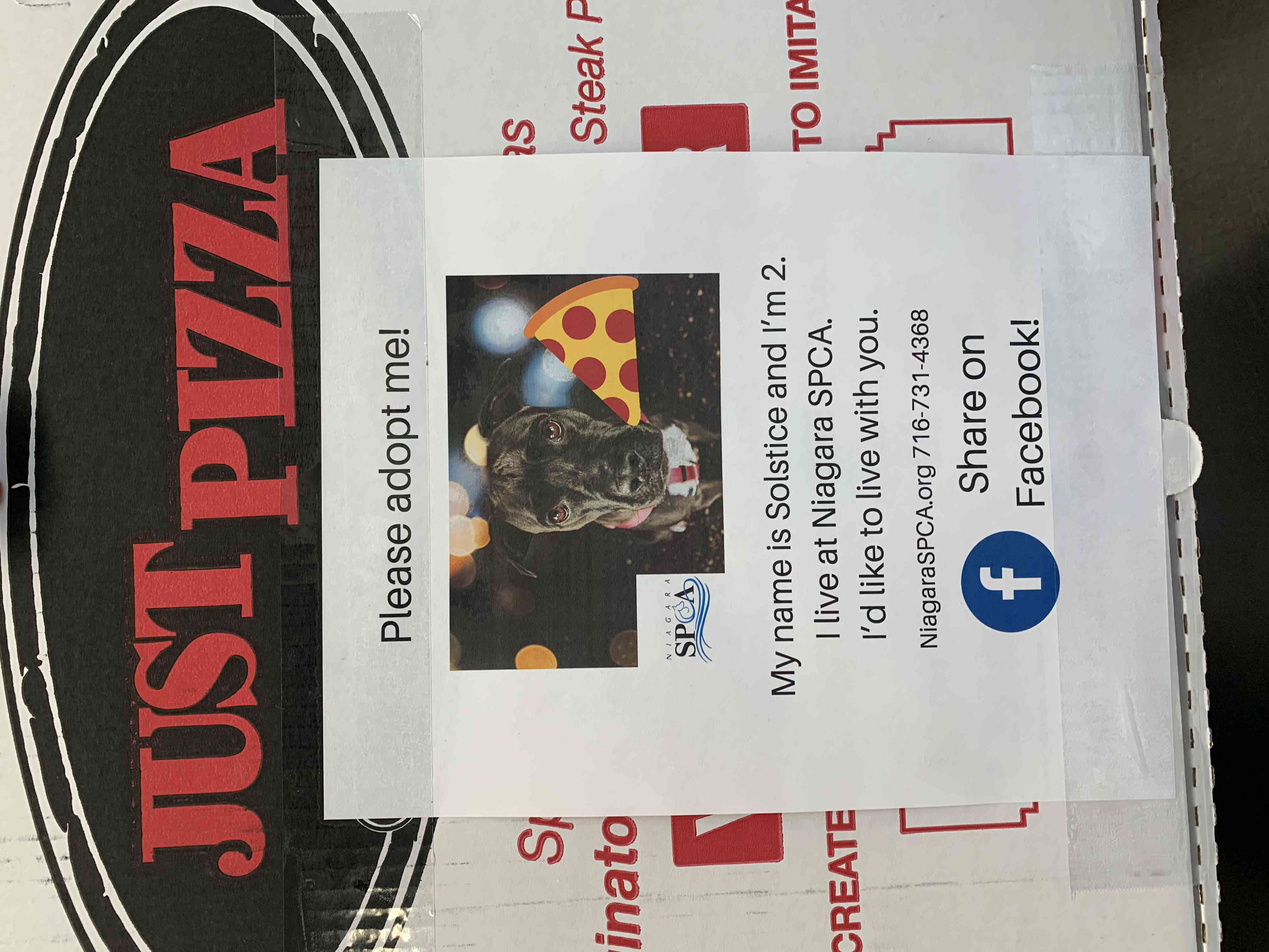 adoptable dog Solstice on a pizza box