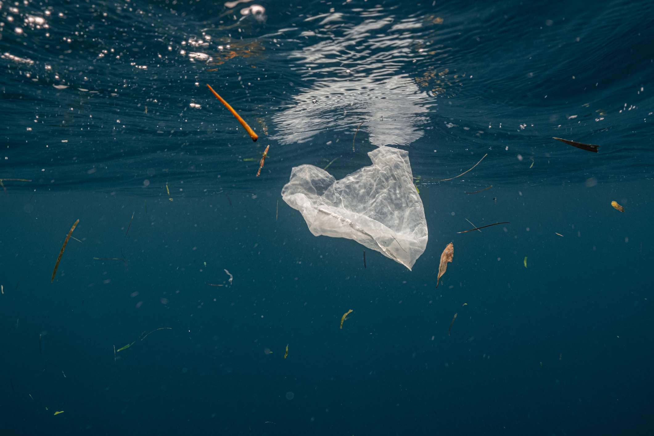Single-use plastic floating in the surface