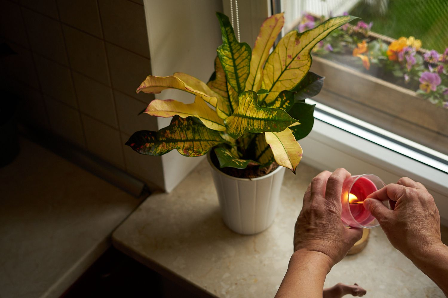 yellow and green Croton plant in white pot near windowsill while person lights candle