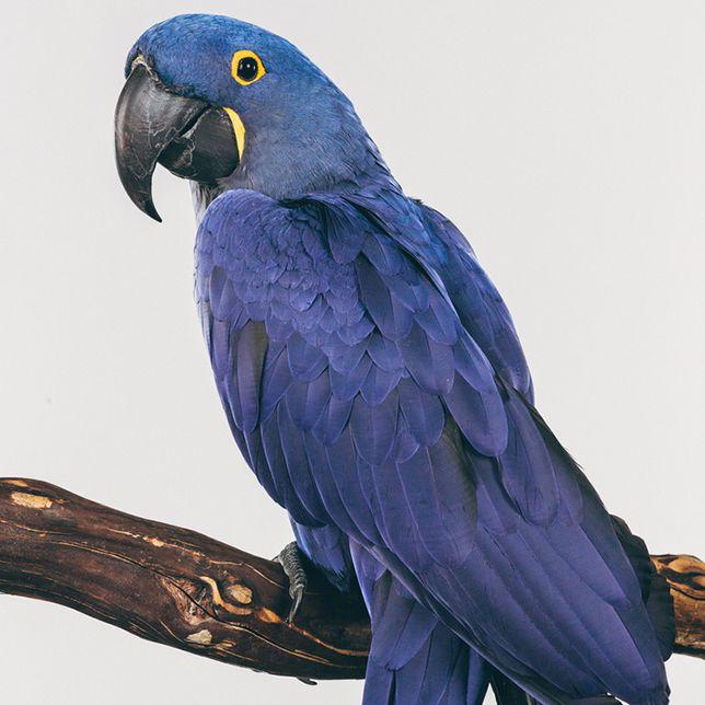 Exotic birds: Mosley
