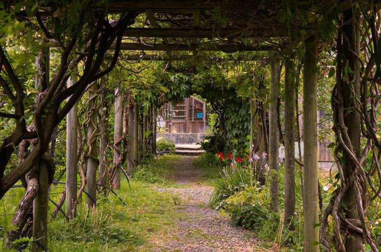 Garden path and pergola