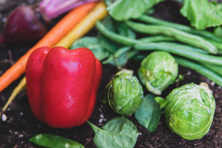 A bell pepper, carrots, beets, green beans, and Brussels sprouts displayed on black dirt