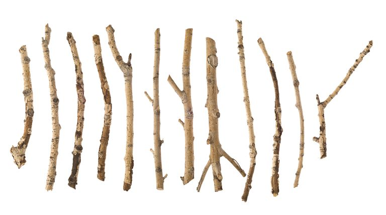 twigs on a white background