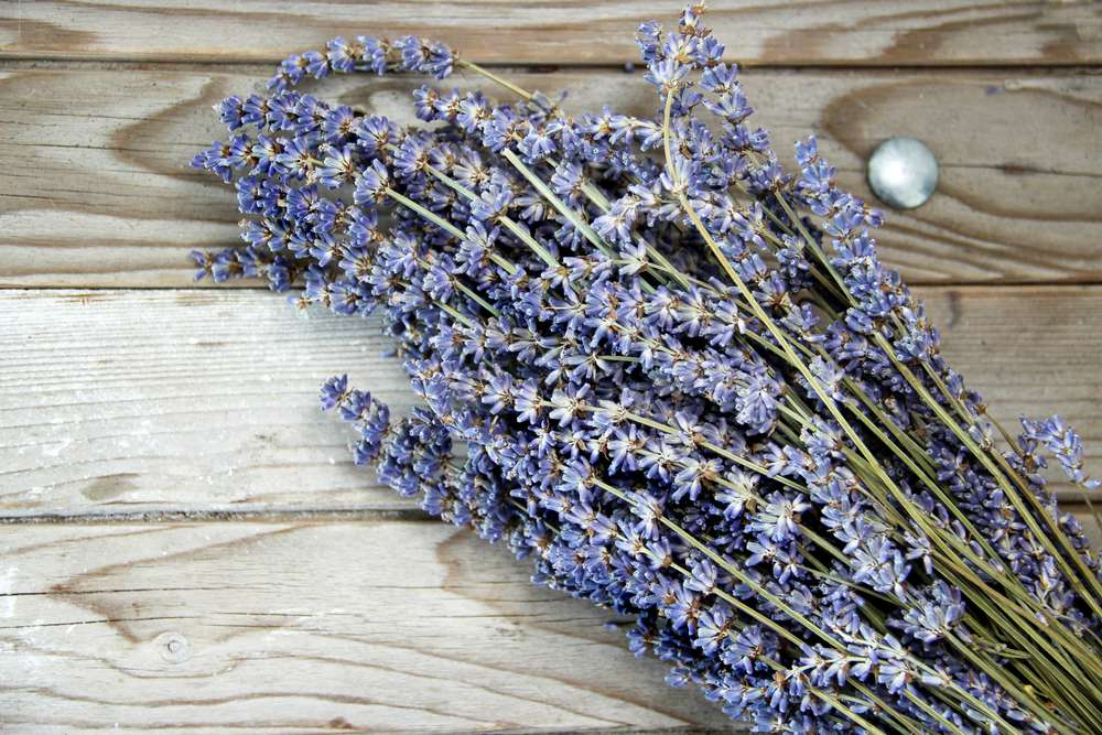 dried lavender, plants that repel insects