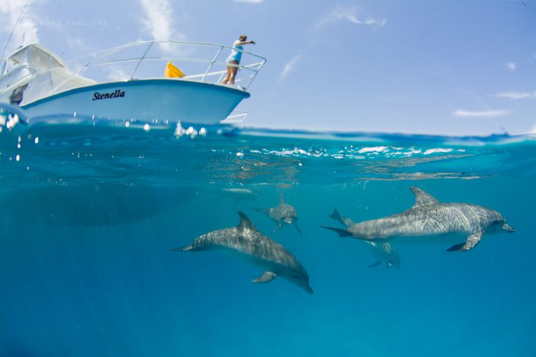 Dolphin Research Boat Floats above Dolphins