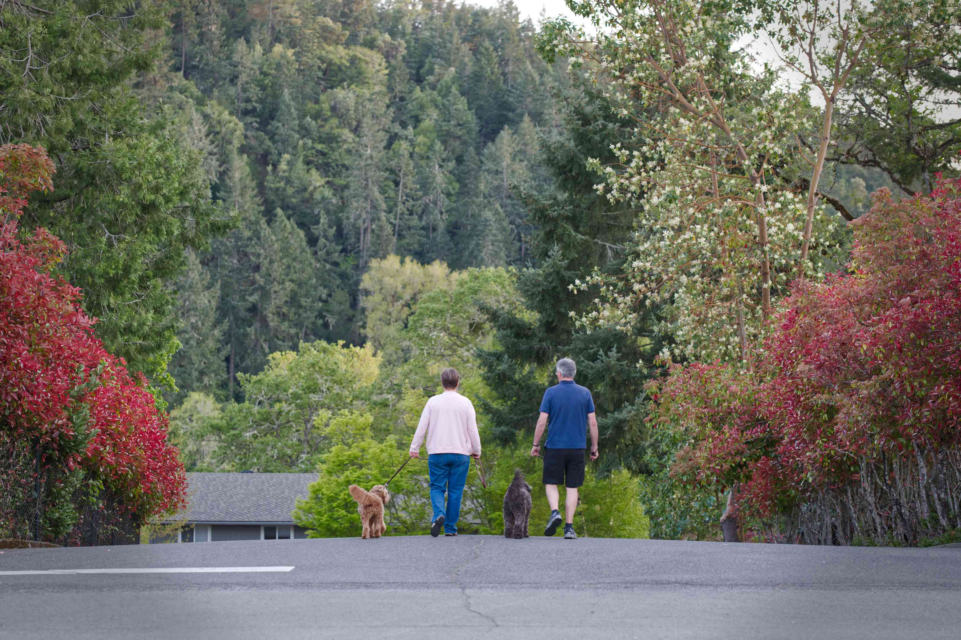 long shot of couple walking two dogs with backdrop of thickly wooded street and hills in distance