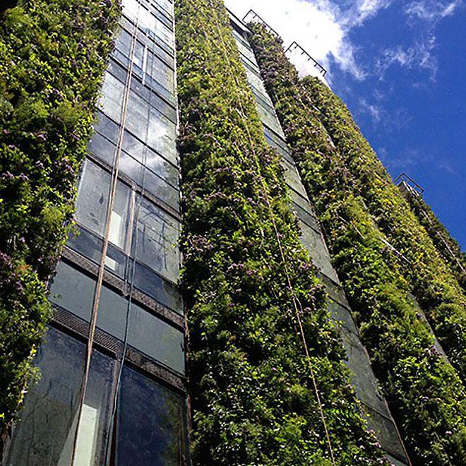 Gardens planted between windows