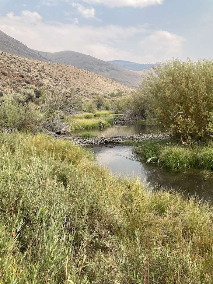 Photo 172 shows the Lake Creek lease, which WWP acquired twenty years ago (and which we still hold). After two decades of no grazing, the creek has rebounded wonderfully. Beavers have recolonized the area (see the dam in the picture) and the vegetation has grown back, remaining lush and green, even in this exceptional drought year (and we did nothing but let it rest for 20 years).