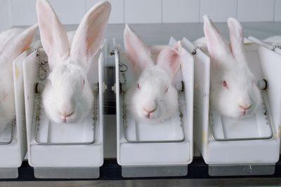rabbit cosmetic testing