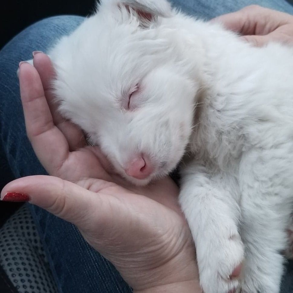 Starla the rescued puppy sleeps on her way to her foster home.