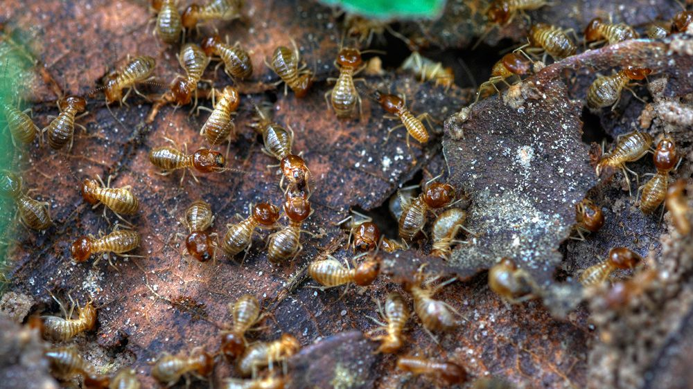 Do You Have Flying Ants Or Termites