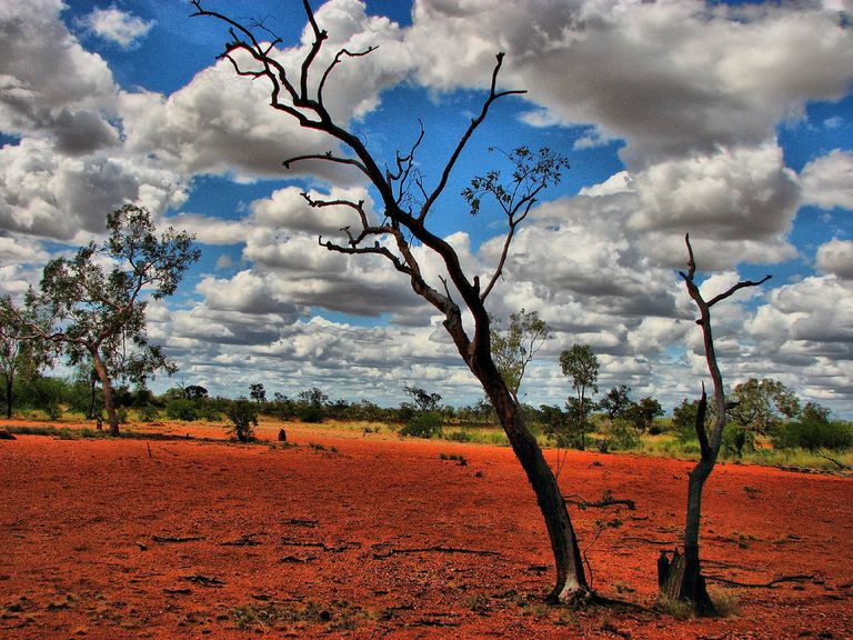 Nearly leafless tree against a ruined landscape