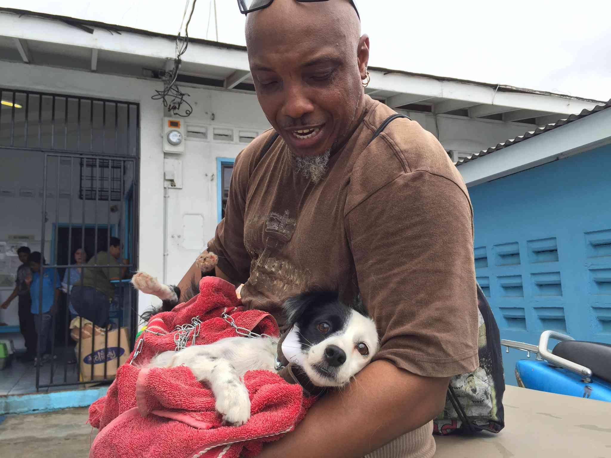 A dog at a spay/neuter clinic in Guyana