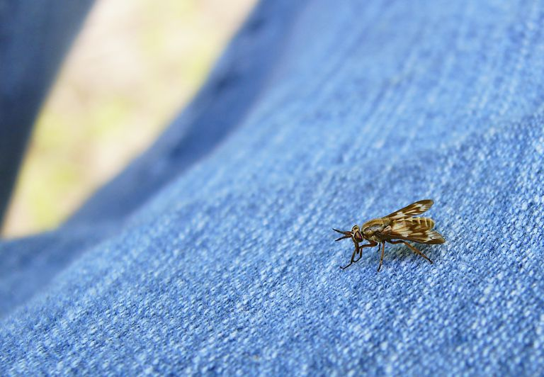 Deer fly crawling on a person's jeans