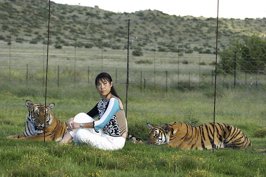 Li Quan sitting in grass with two tigers