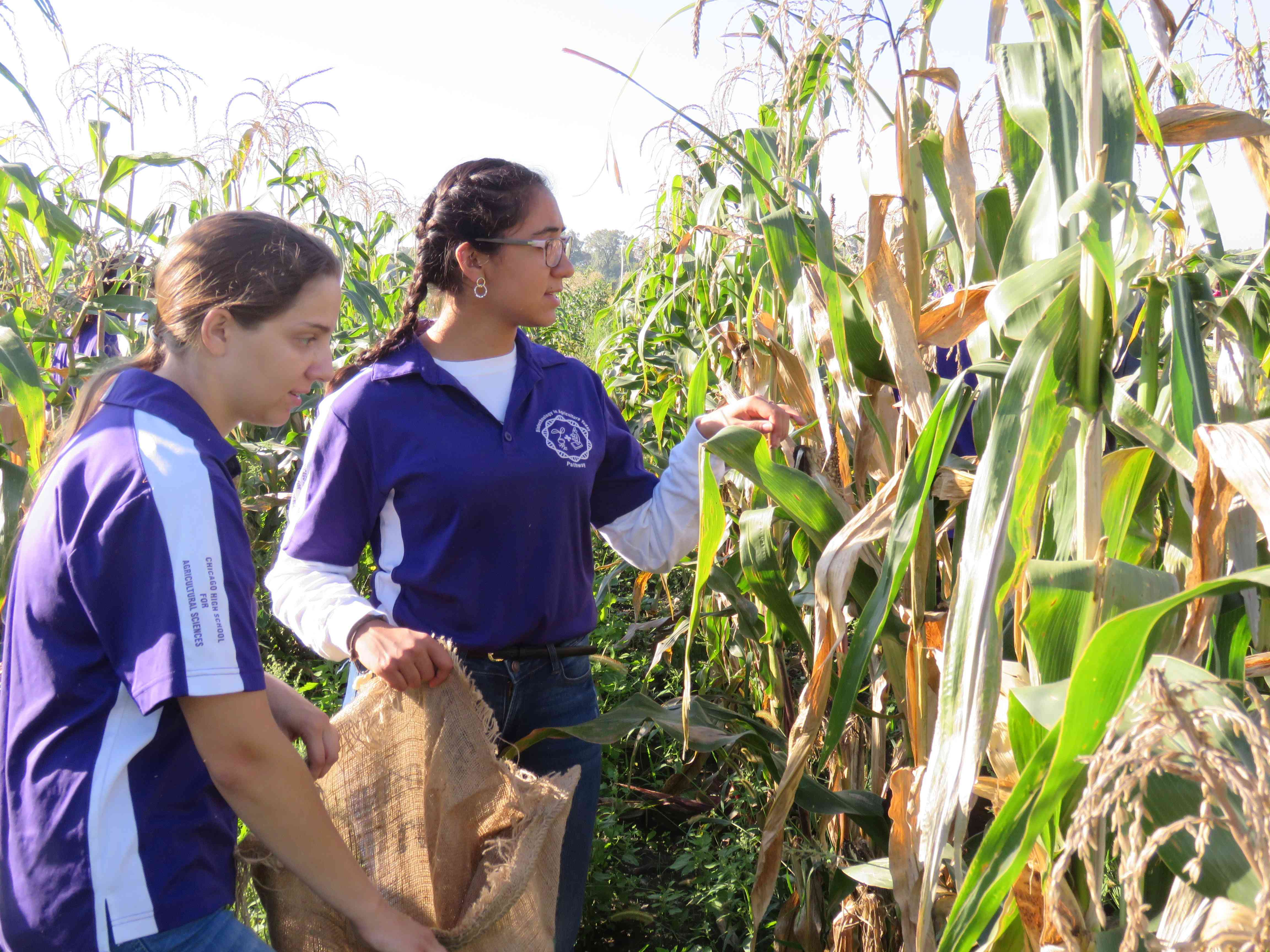 Students inspect crops on campus.