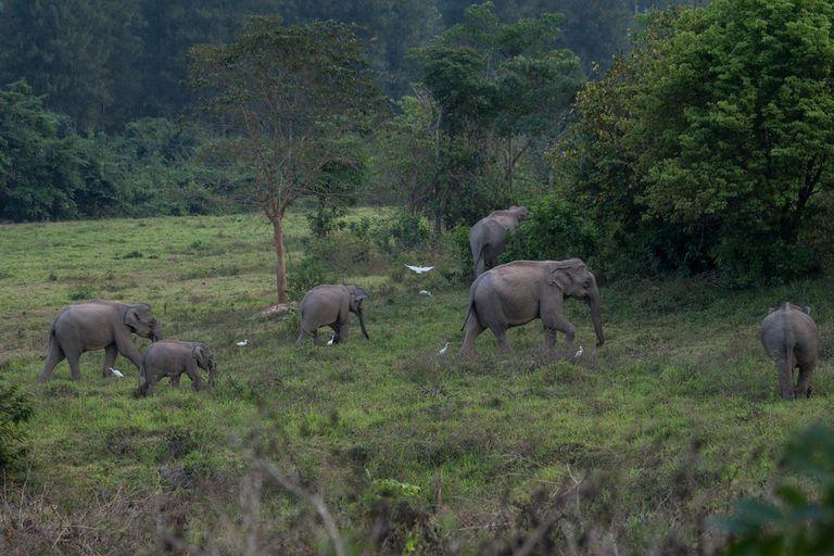 Thomas Cristofoletti / WWF-USImages show herd of Asian elephants in Kuri Buri National Park, Thailand