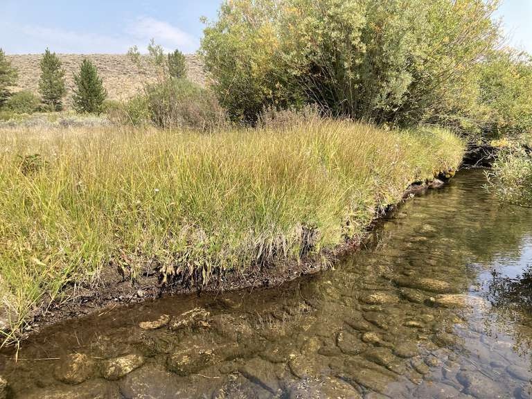 Photo shows a stream less than a mile away from Champion Creek that has not had grazing pressure.
