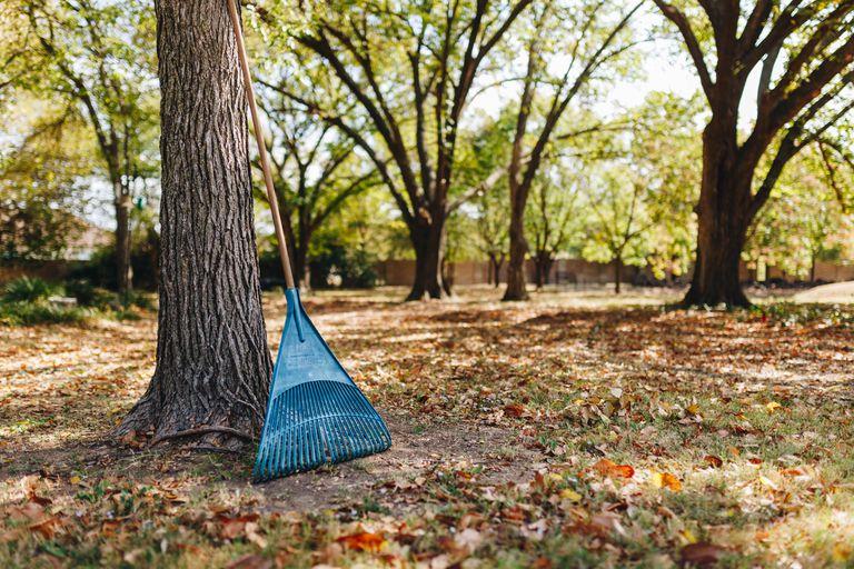 hero shot of rake in big yard with leaves