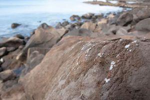 Plasticrust as seen on rocks in Madeira