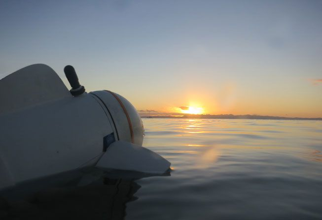 SoFi 'stares' off at the sunset on the ocean surface