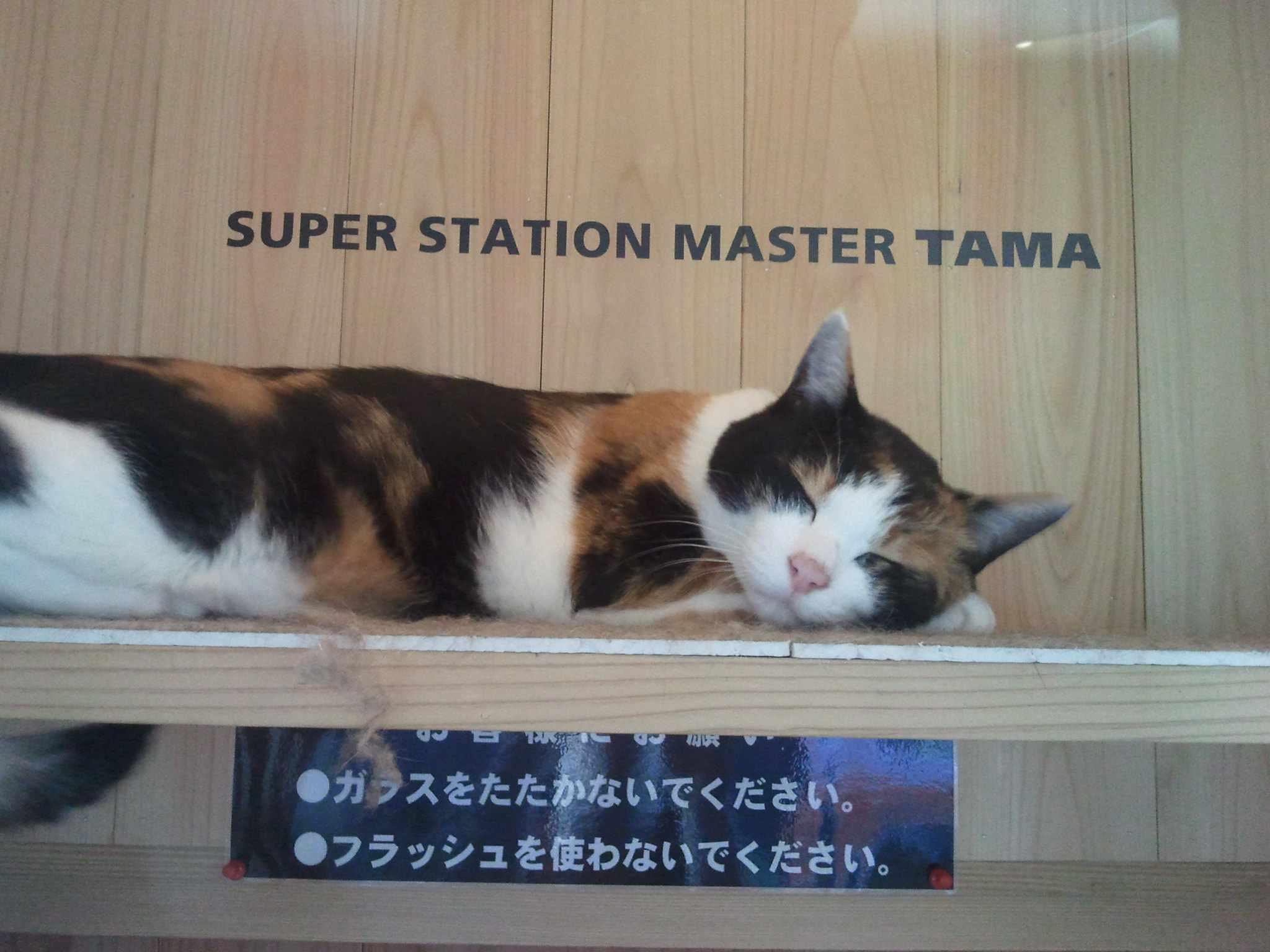 calico cat sleeping in window