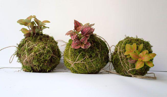 Estas impresionantes plantas colgantes son fáciles de hacer