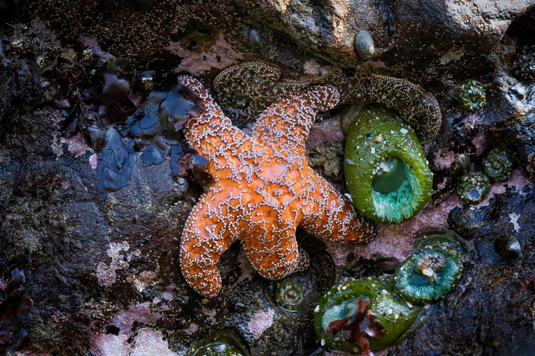 A starfish attached to a colorful reef.