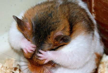 real hamster photo