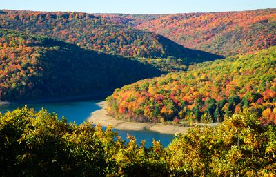 View from above the Allegheny National Forest covered in a lush forest of trees in full fall colors of red, gold, orange, yellow, and green under a blue sky