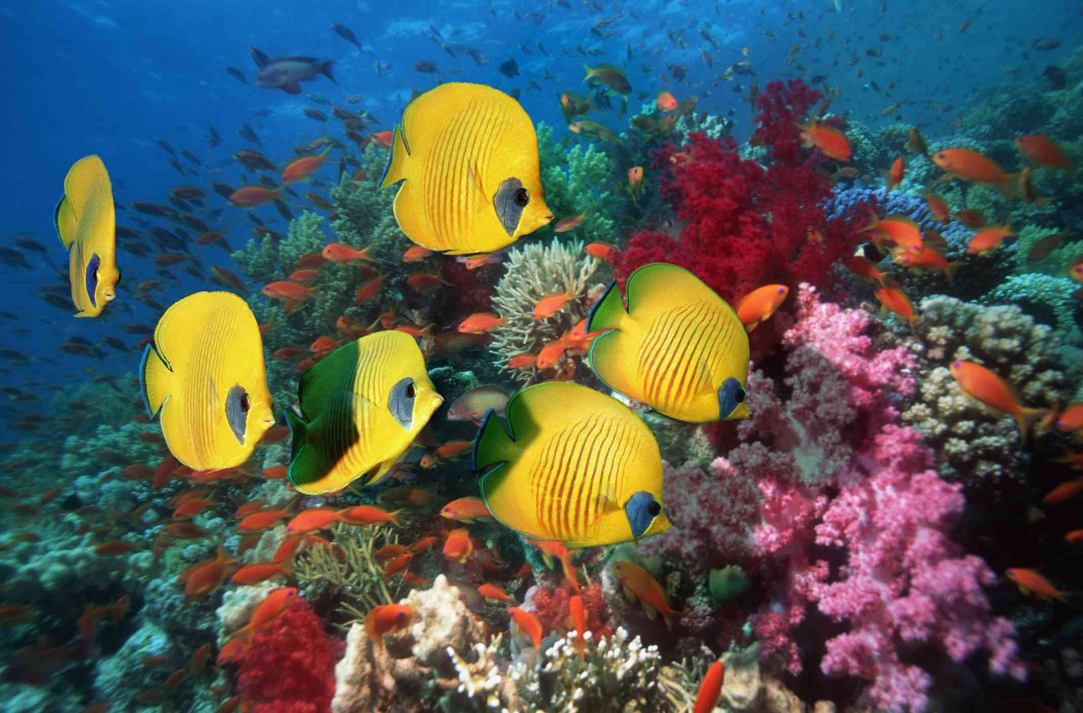 12 Gorgeous Animals of the Coral Reef - photo#9