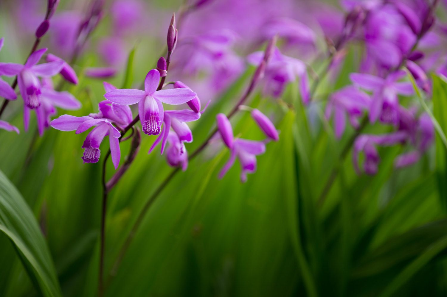 Small, purple flowers clustered amid a grassy background