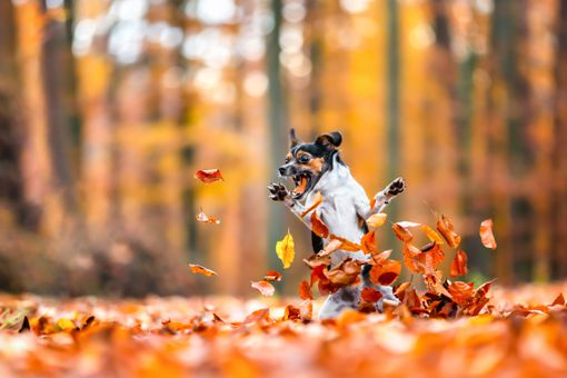 excited dog playing in leaves