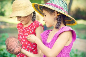 Two young girls harvest a potato from the garden