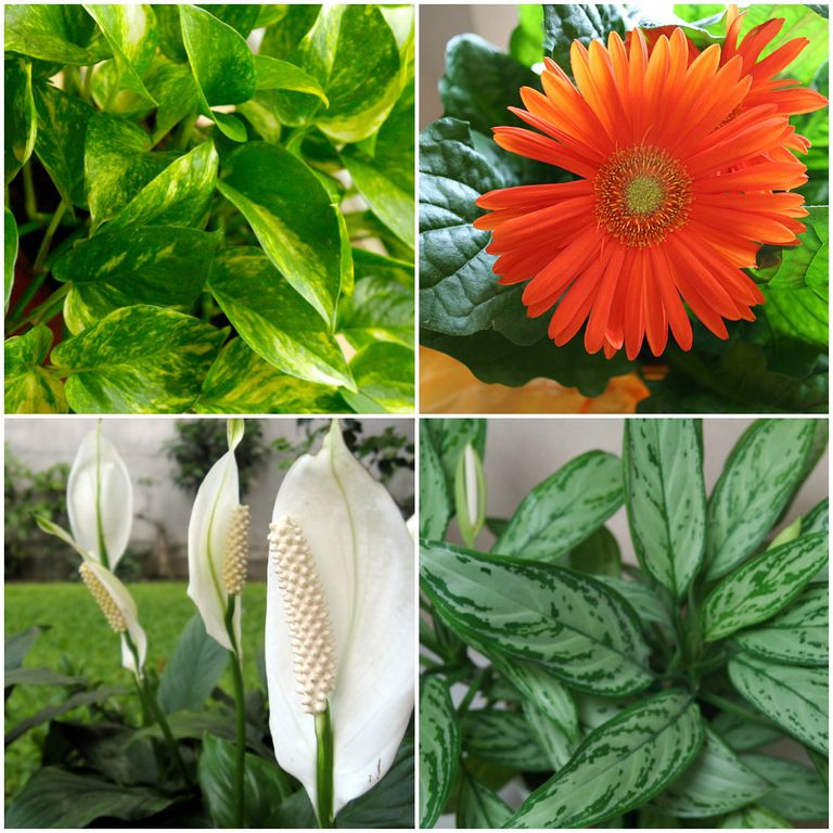 Multiple plants that are great for indoor oxygen