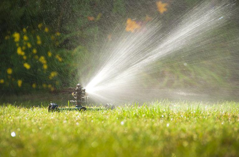 Cómo regar su jardín durante una sequía