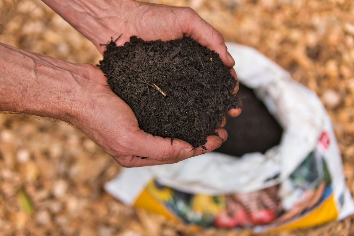 two hands holding soil above a potting mix bag