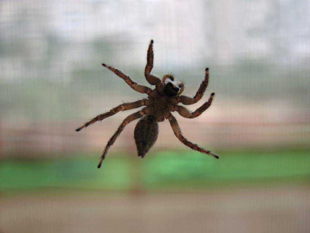 spider climbing a window