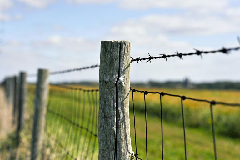 Old style, rustic wood post barb wire fence protecting a corn field in the midwestern US