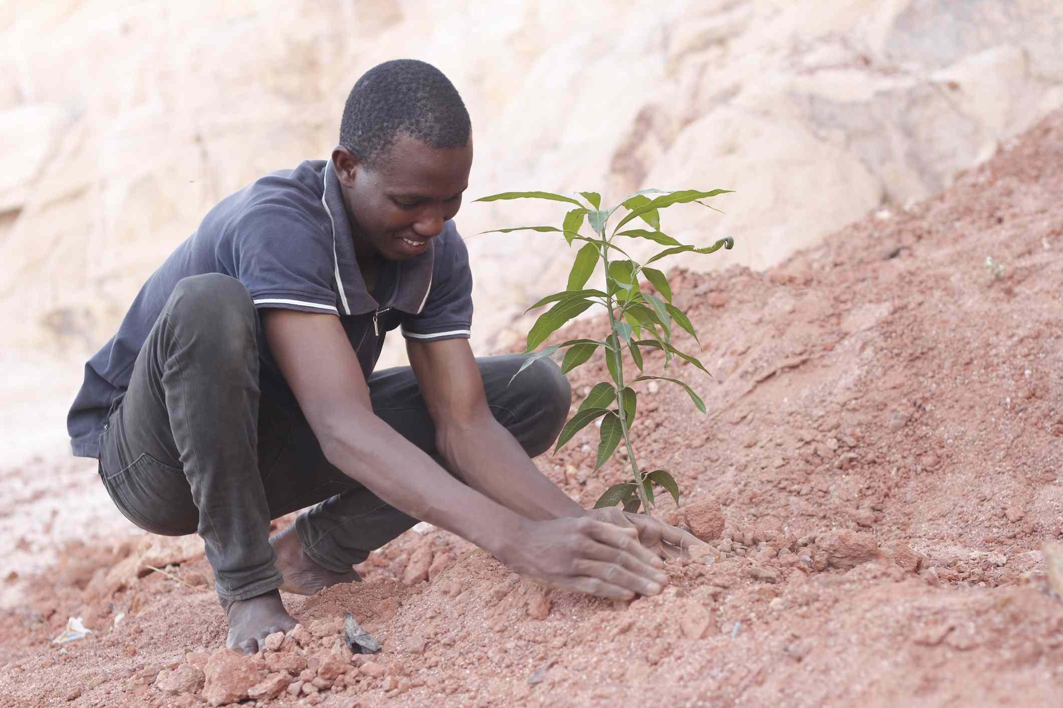 A man plants a tree sapling to fight desertification