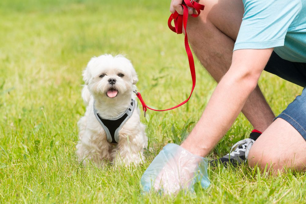 Dog owner with poop bag