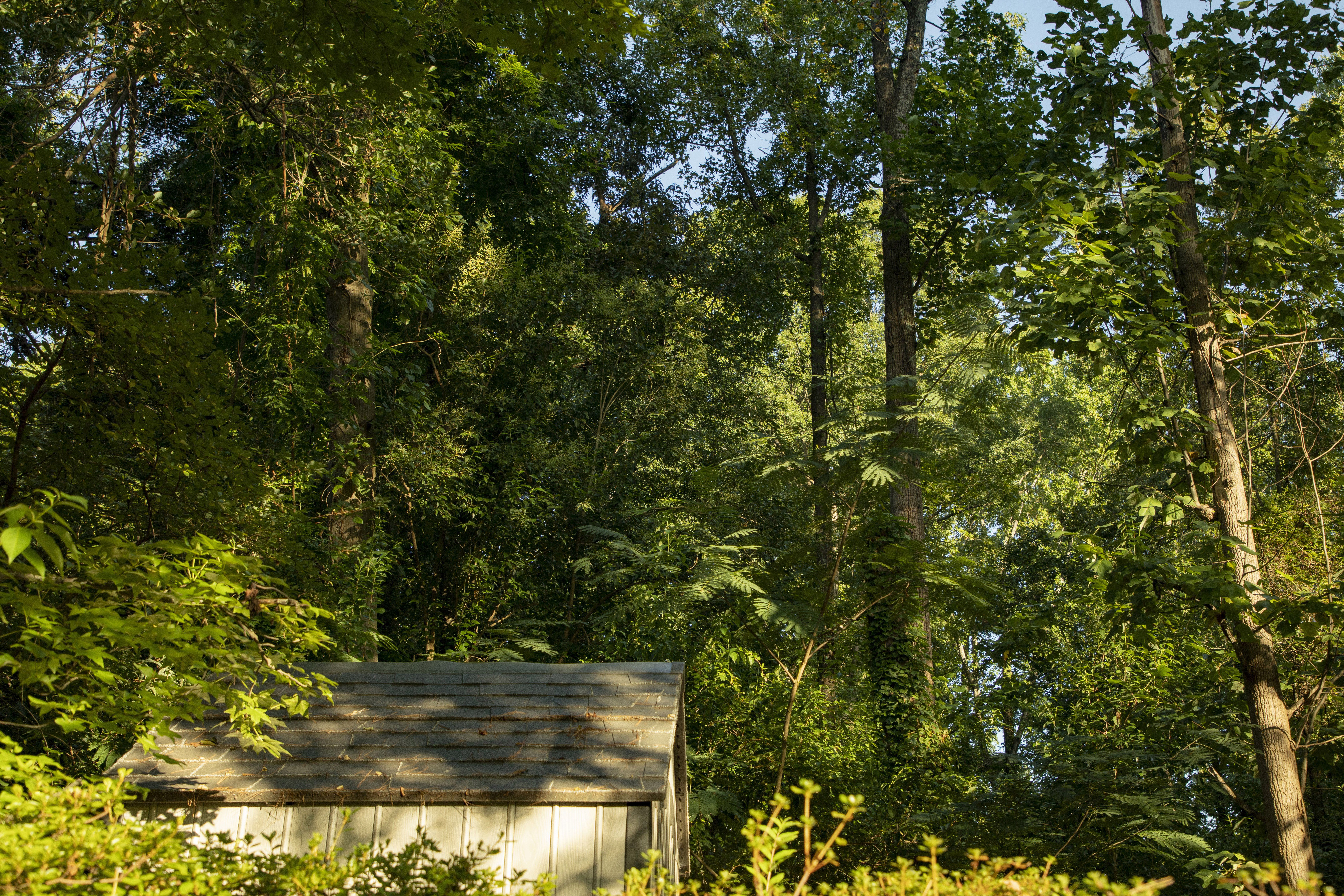 Grow a 100-Year-Old Forest in Your Backyard in Just 10 Years