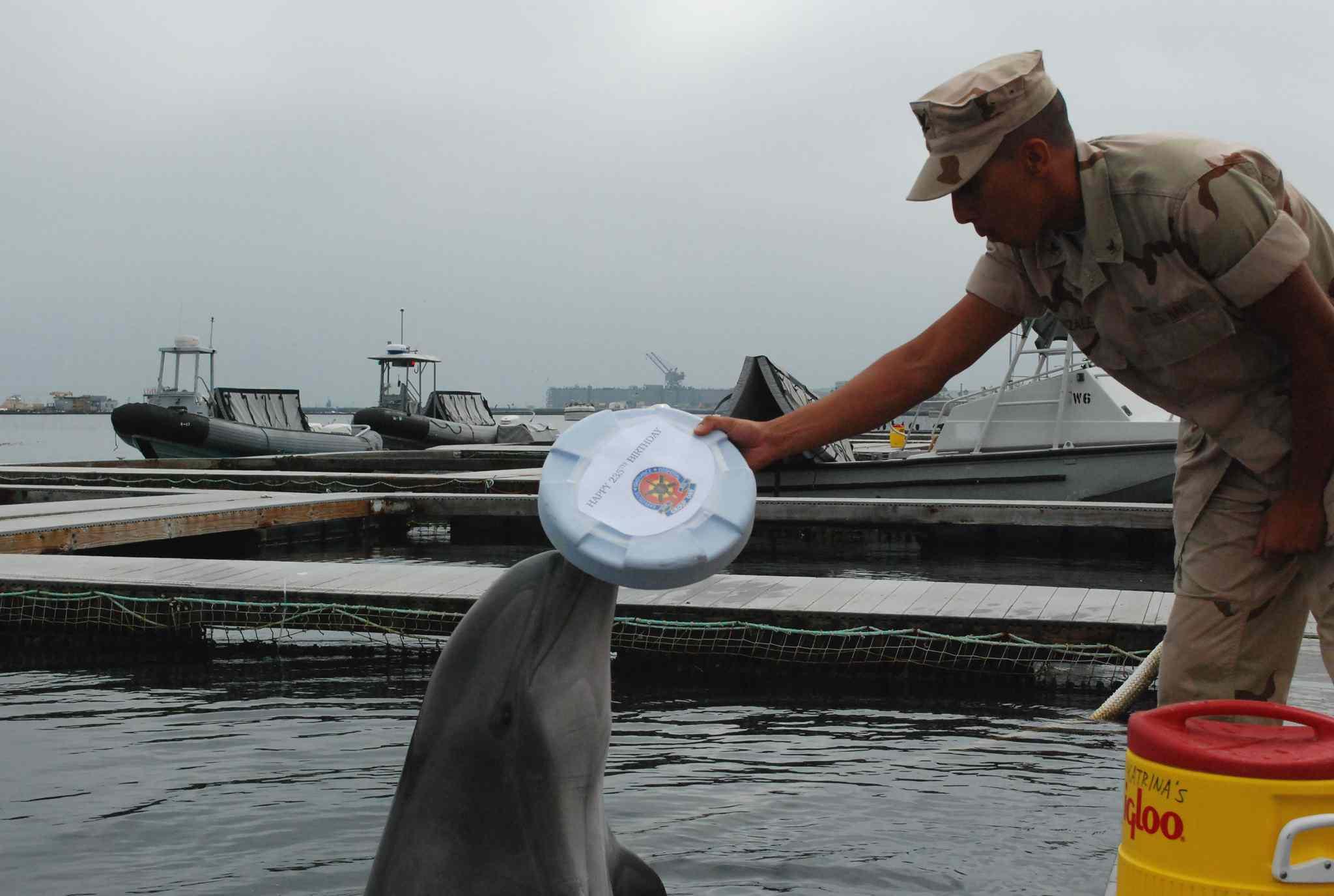 marine mammal handler training dolphin with white disk