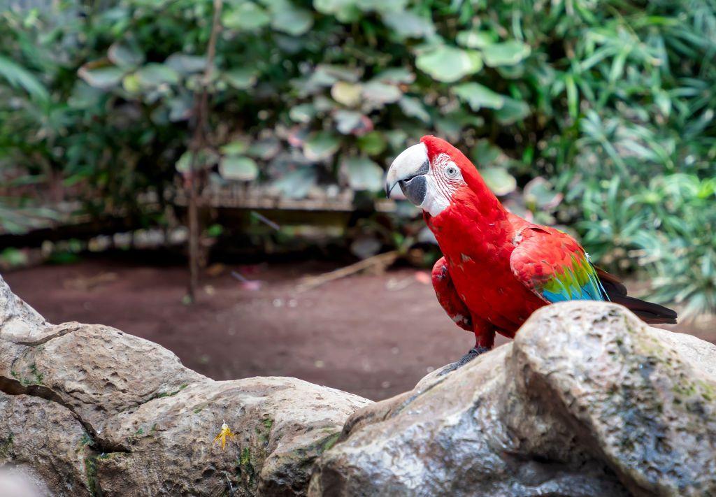 A macaw looks ahead.