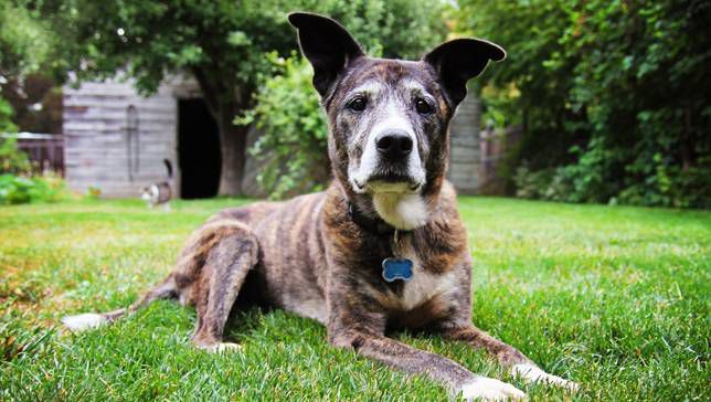 7 Things Your Senior Dog Would Like to Tell You