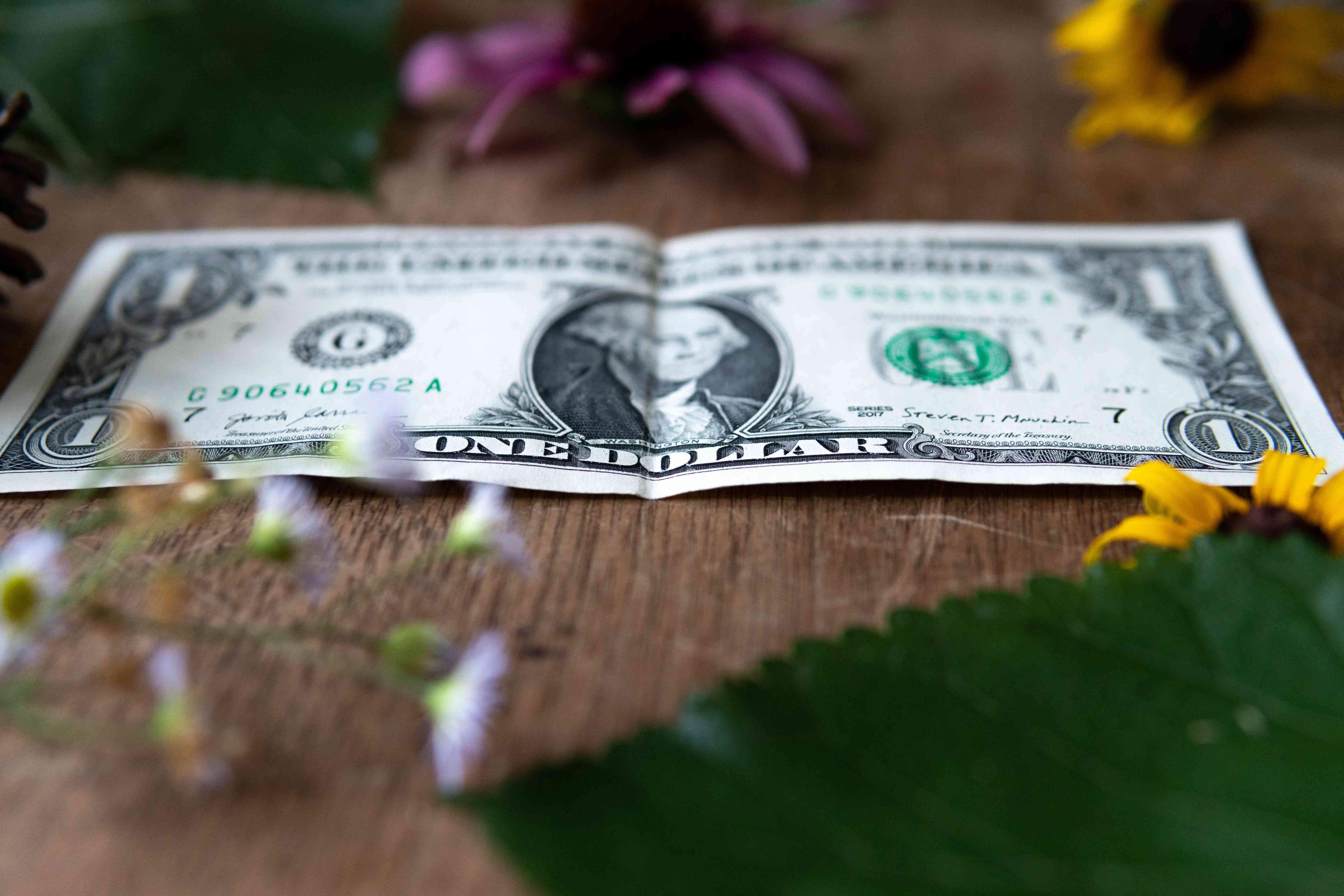 dollar bill on wooden table surrounded by plants and flowers