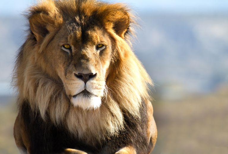 Los animales 'populares' enfrentan un mayor riesgo de extinción